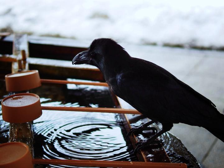 The Raven Redux