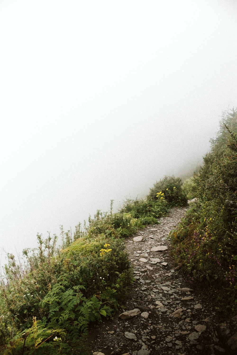 pathway on hill