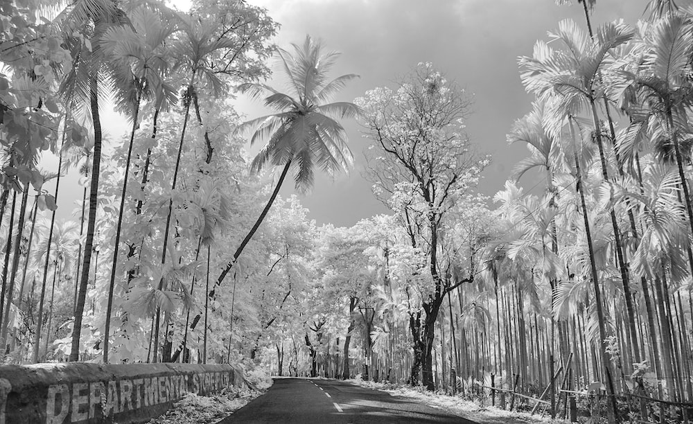 greyscale photography of empty road in between trees