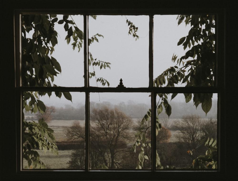 window overlooking green trees