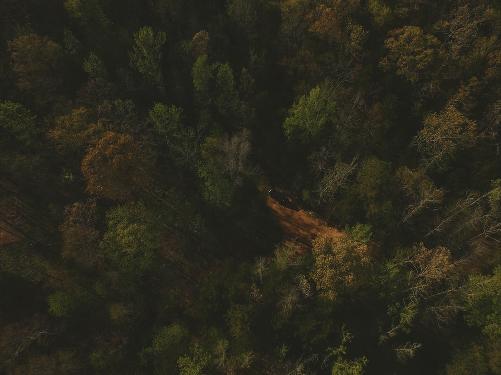 aerial view of green tall trees
