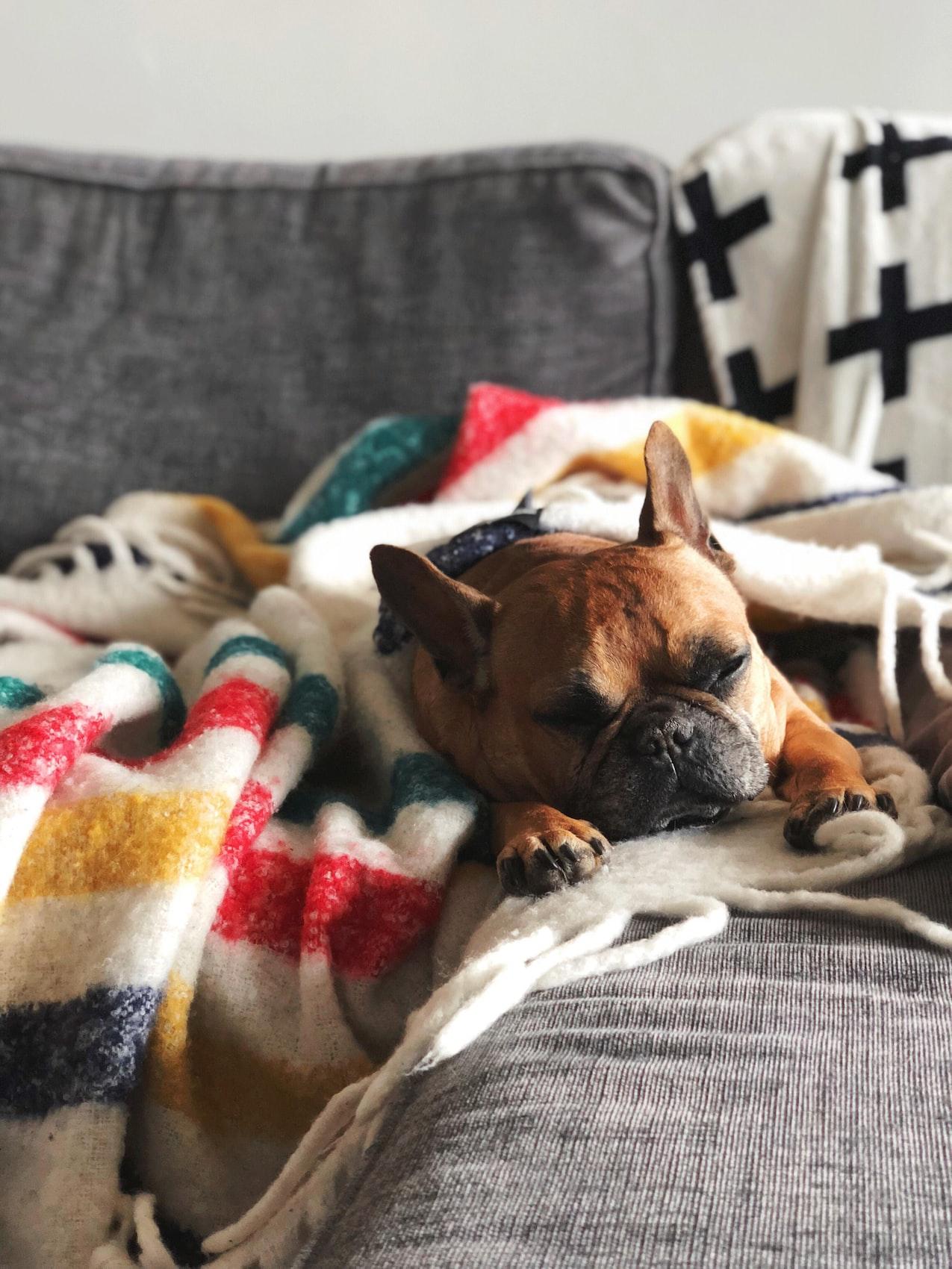 Chien endormi sur la couverture d'un canapé