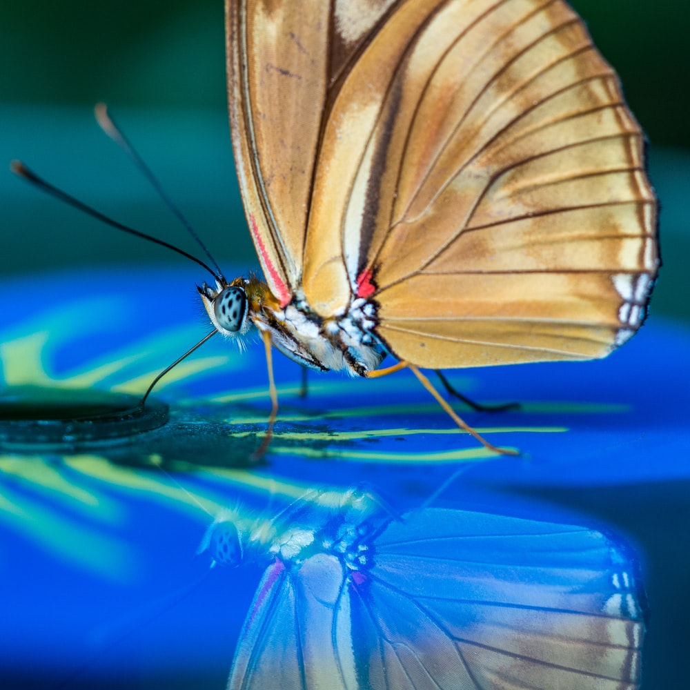 brown butterfly perched on blue surface in selective focus photograpy