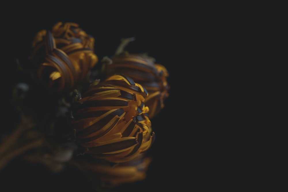 yellow and brown flowers