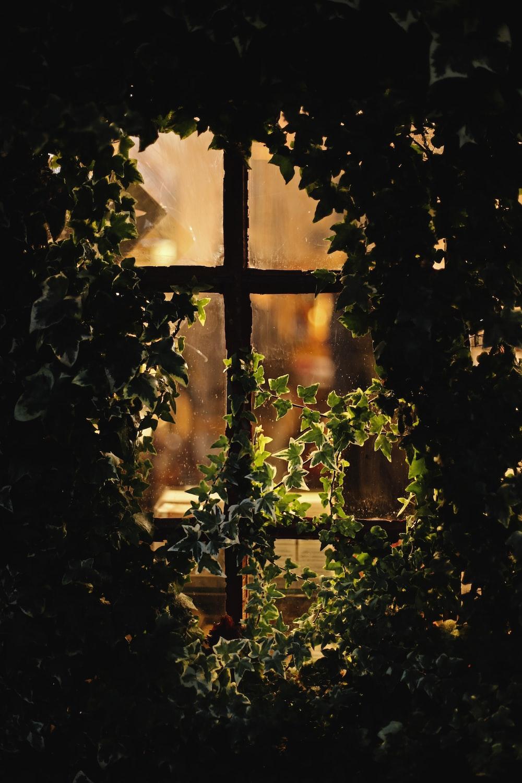 window with vines