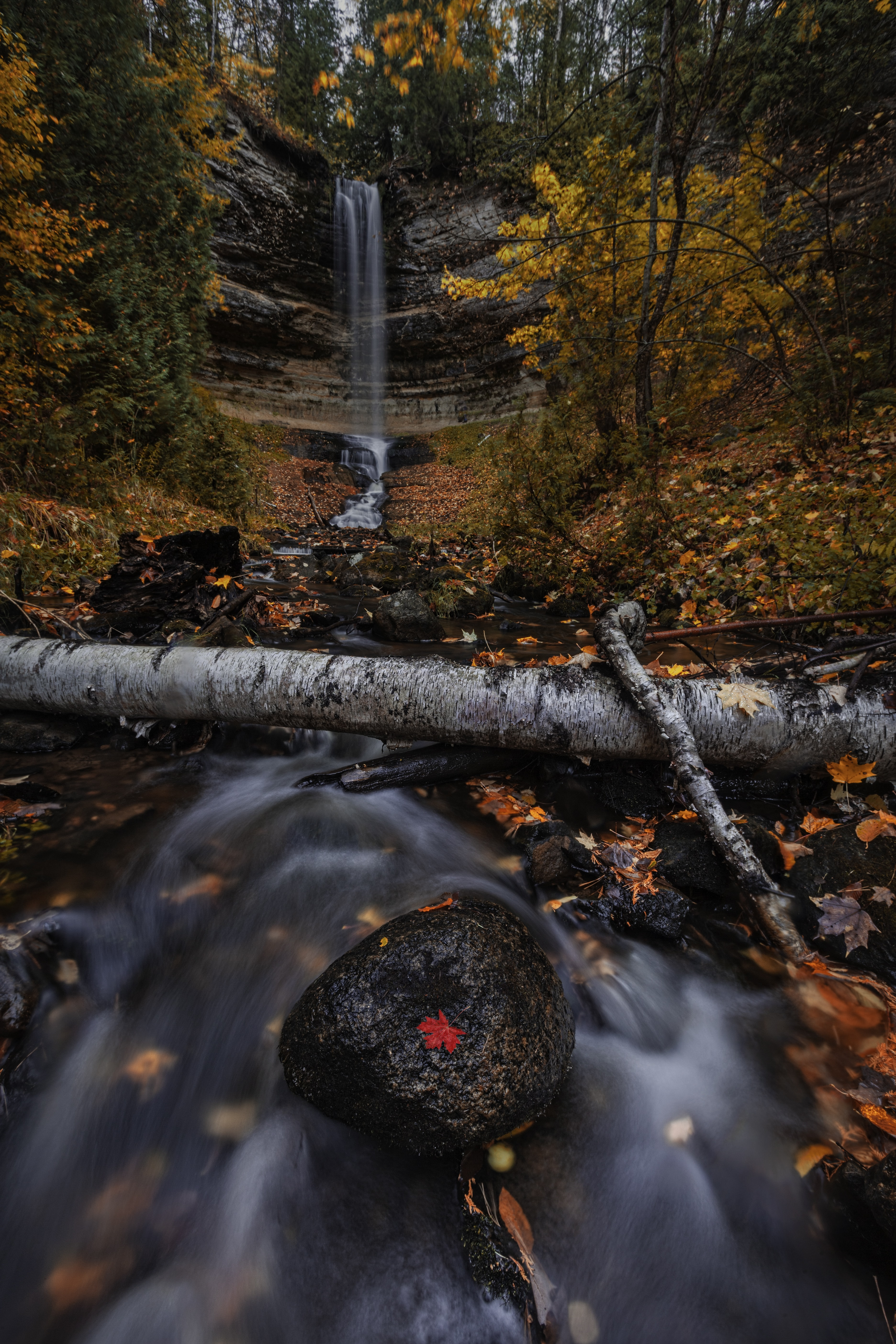 flowing river surrounded with withered leaves time-lapse photography