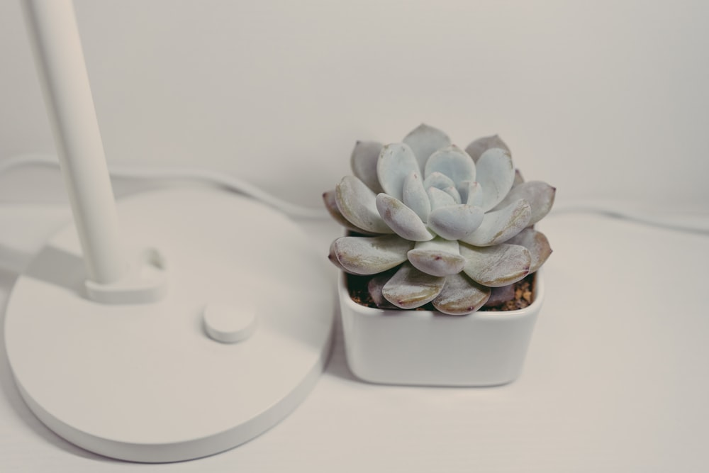 green succulent plant on white panel
