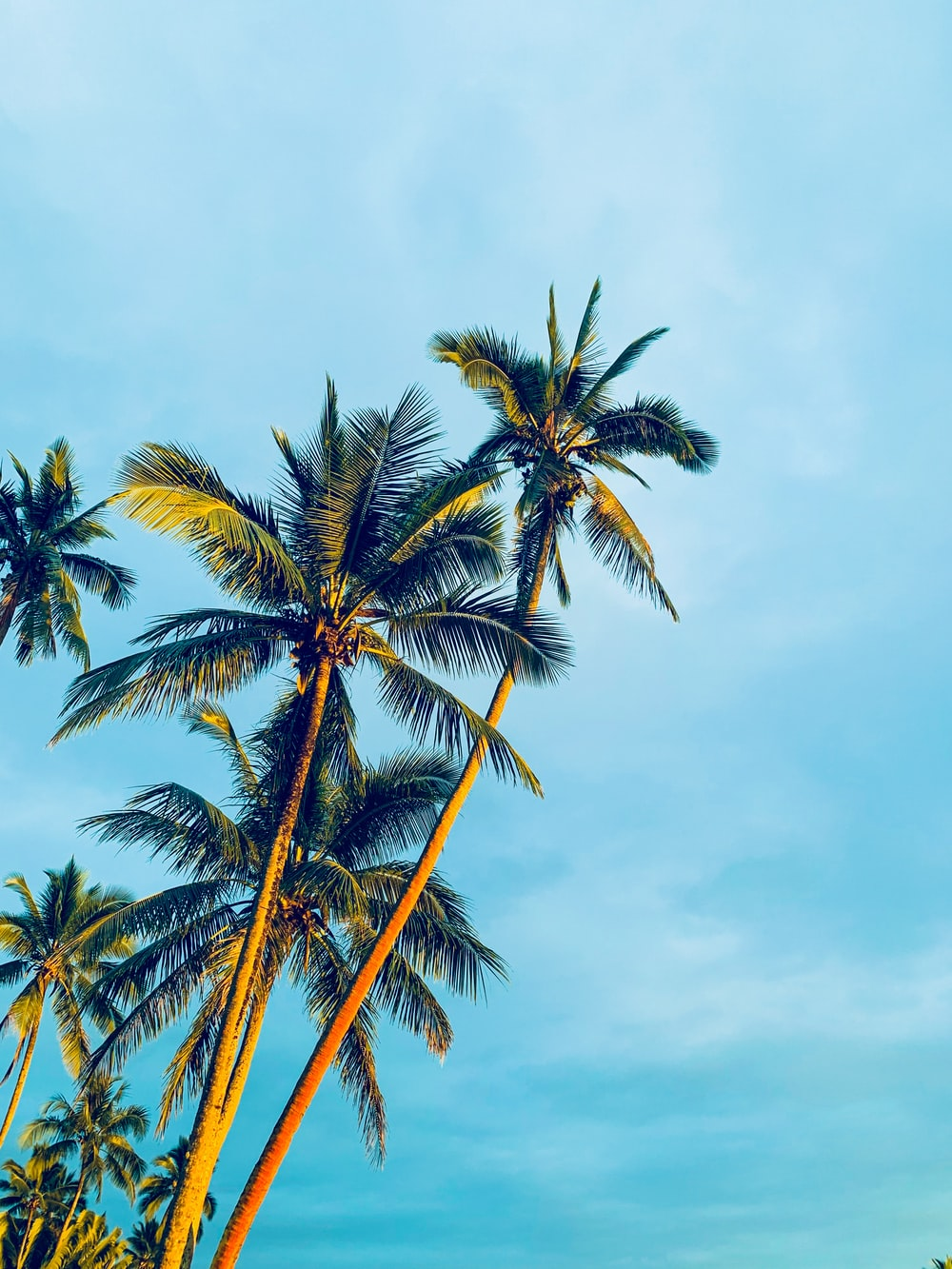 coconut trees under blue sky during daytime