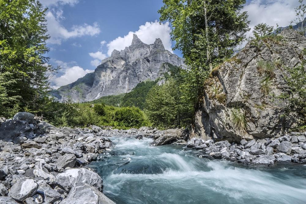 flowing body of water near trees