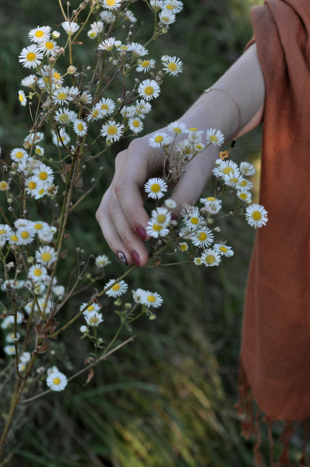 person holding white baby's breath flower