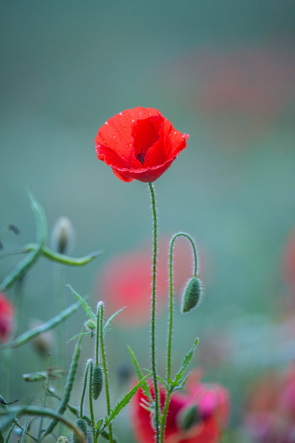 red petaled flower close-up photography