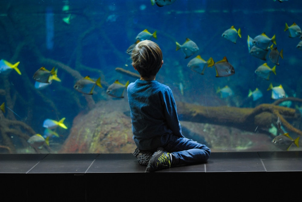 child sitting on aquarium