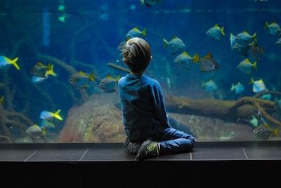child sitting on aquarium aquarium teams background