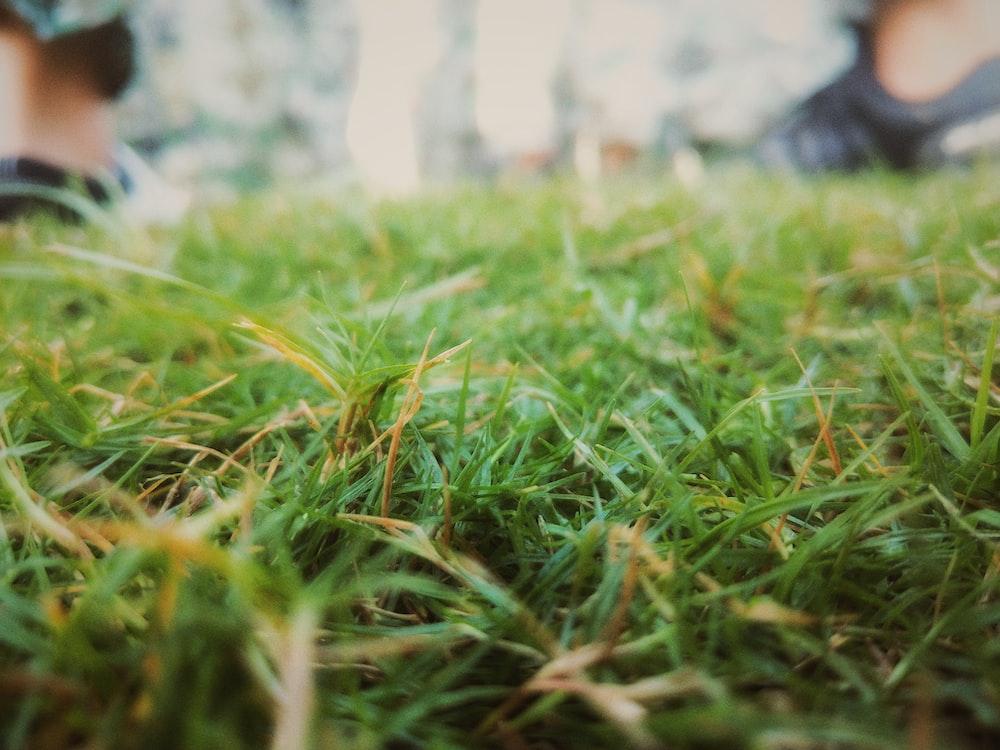 green grass selective-focus focus photography
