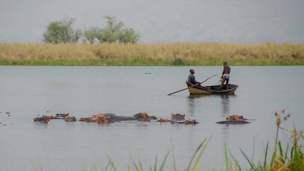two men on boat near group of hippopotamus underwater