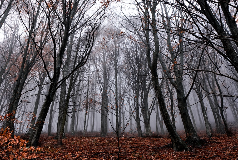 landscape photography of bare trees in forest