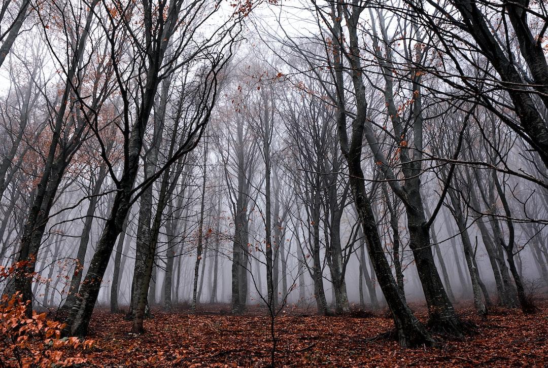 Never ending forest