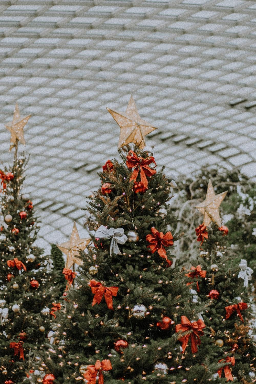 three green Christmas tree during daytime
