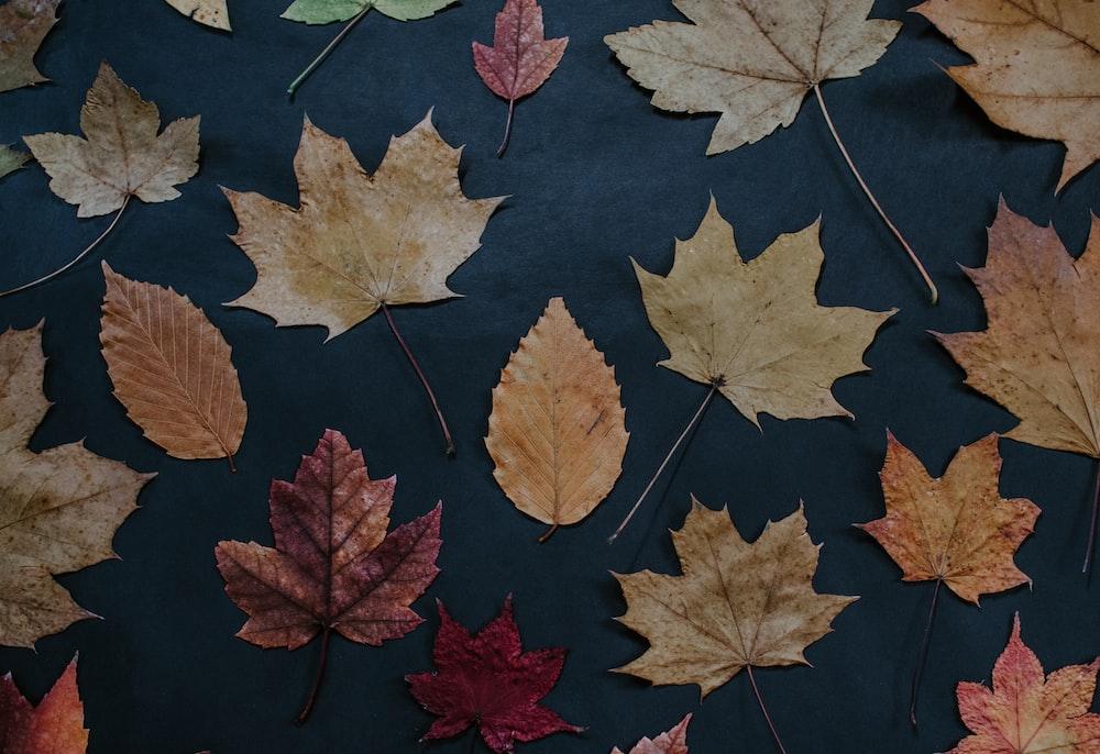 dried leaves on black garment