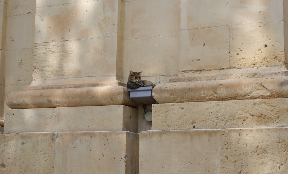 cat lying on square device placed on concrete wall