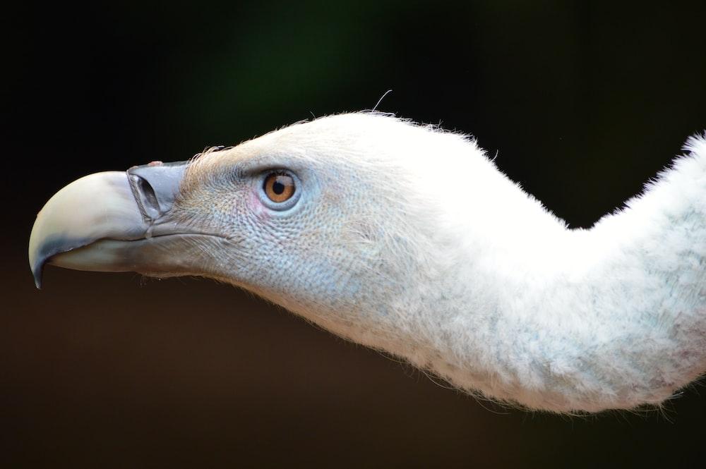 long neck bird