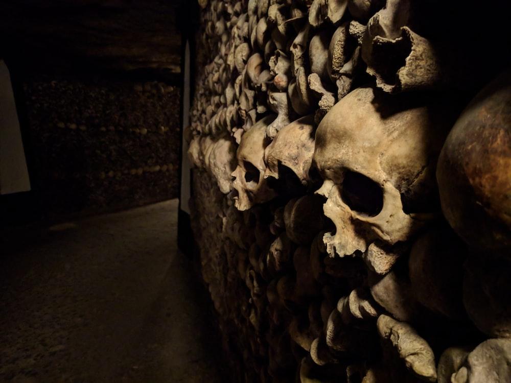 human skull wall