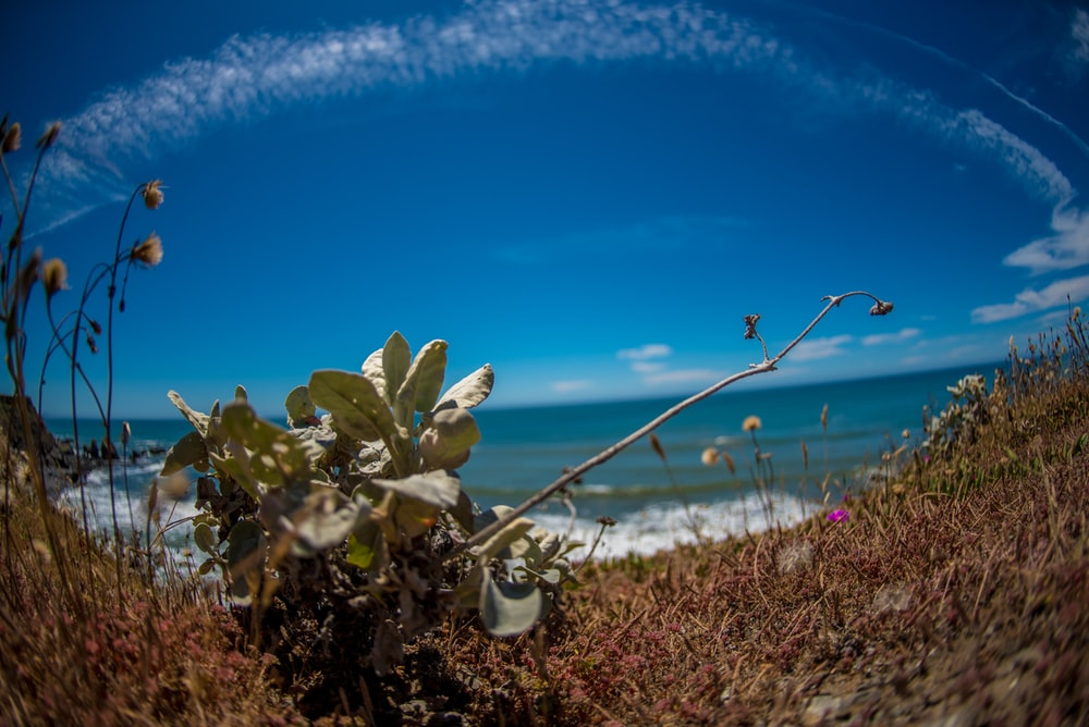 fish-eye photography of plant near body of water