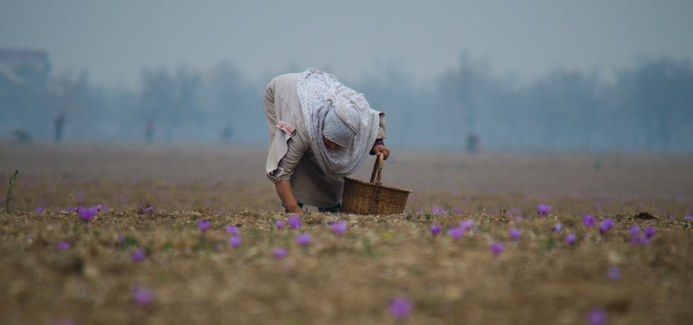 person picking flowers
