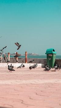 flock of pigeons near trash bin