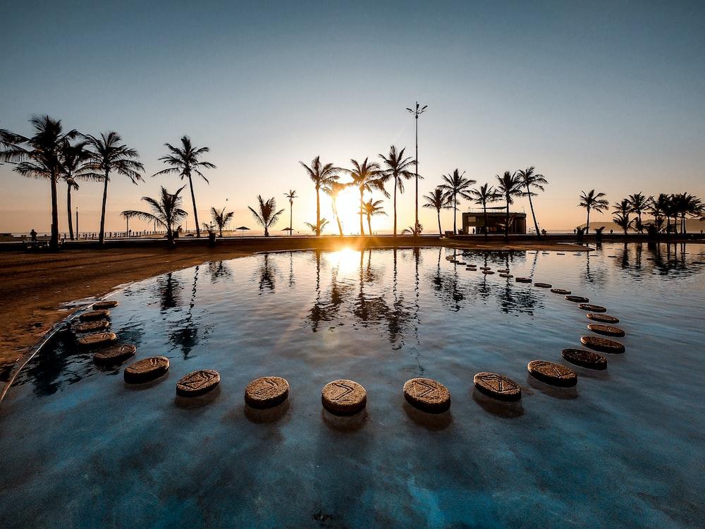 sun raise passing through palm trees near pool