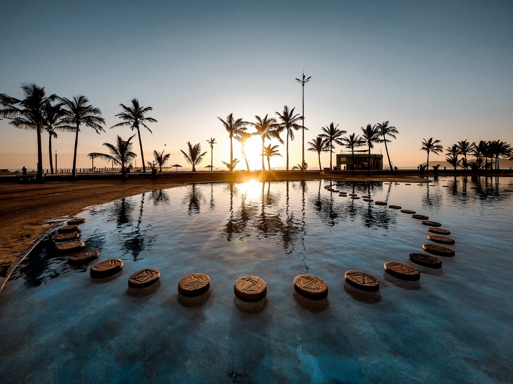 sun raise passing through palm trees near pool