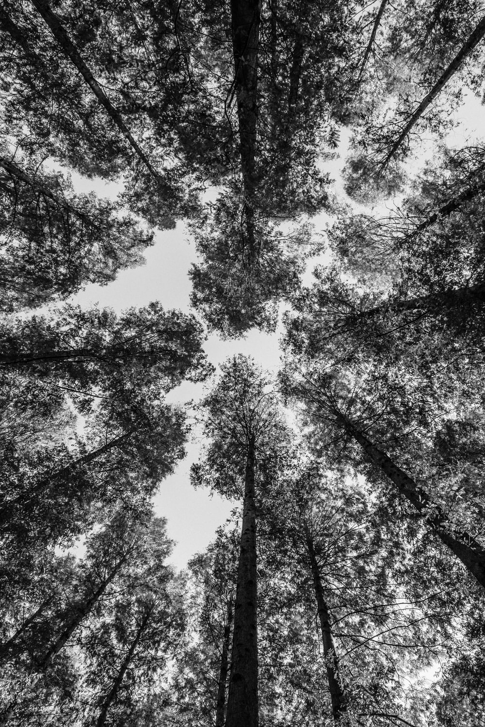 worm view photography of trees
