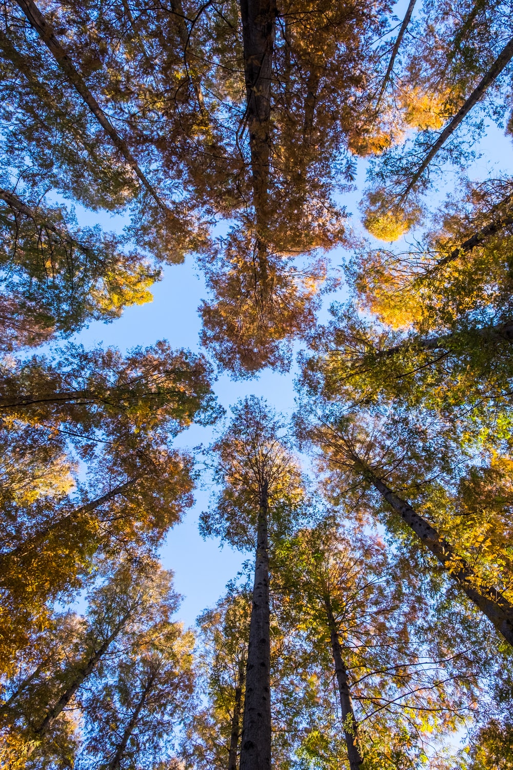 low-angle photography of forest