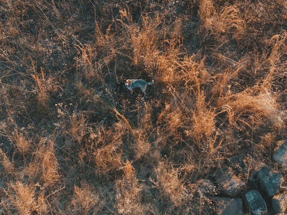 bird's-eye photography of dog standing on grass field