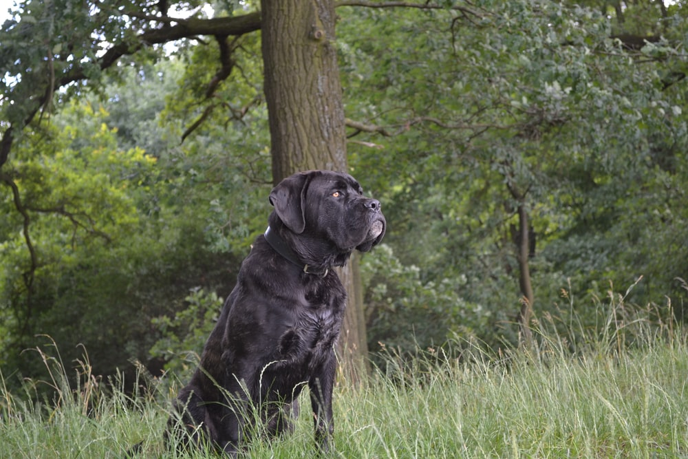 black dog beside tree