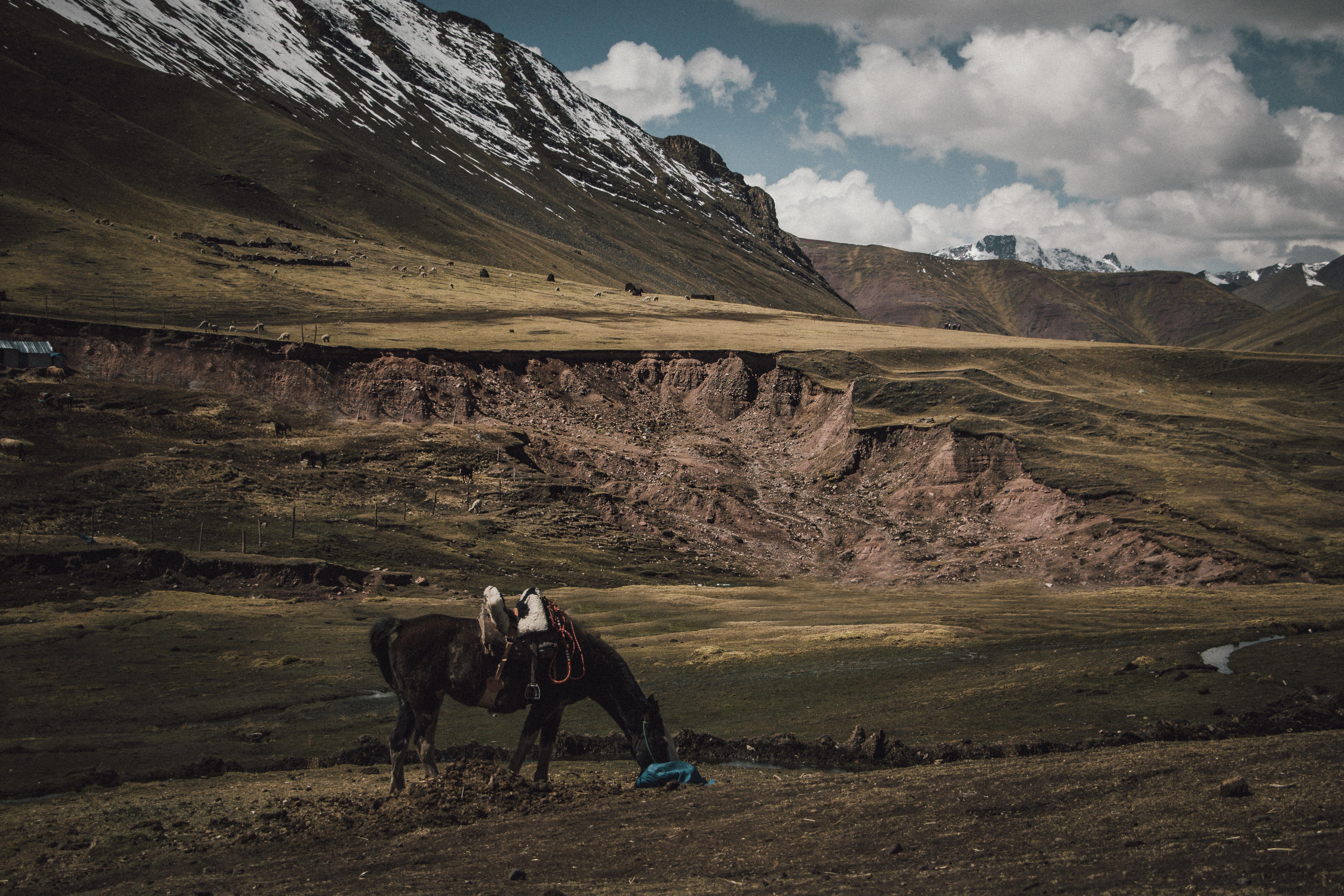 brown horse eating grass near mountains