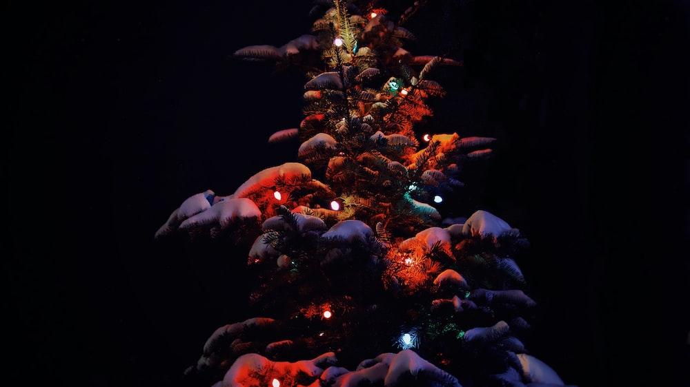 close-up of lighted tree