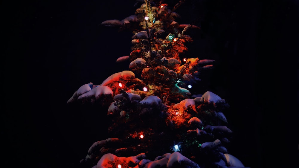 close-up of lighted tree