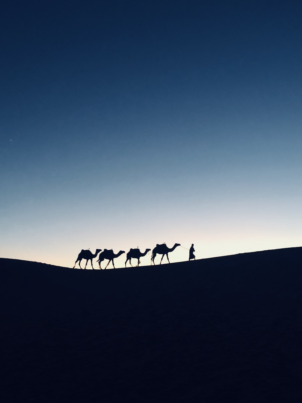 silhouette photography of four camels