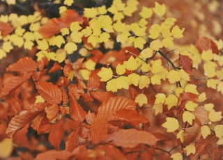 yellow and brown-leafed plants closeup photography