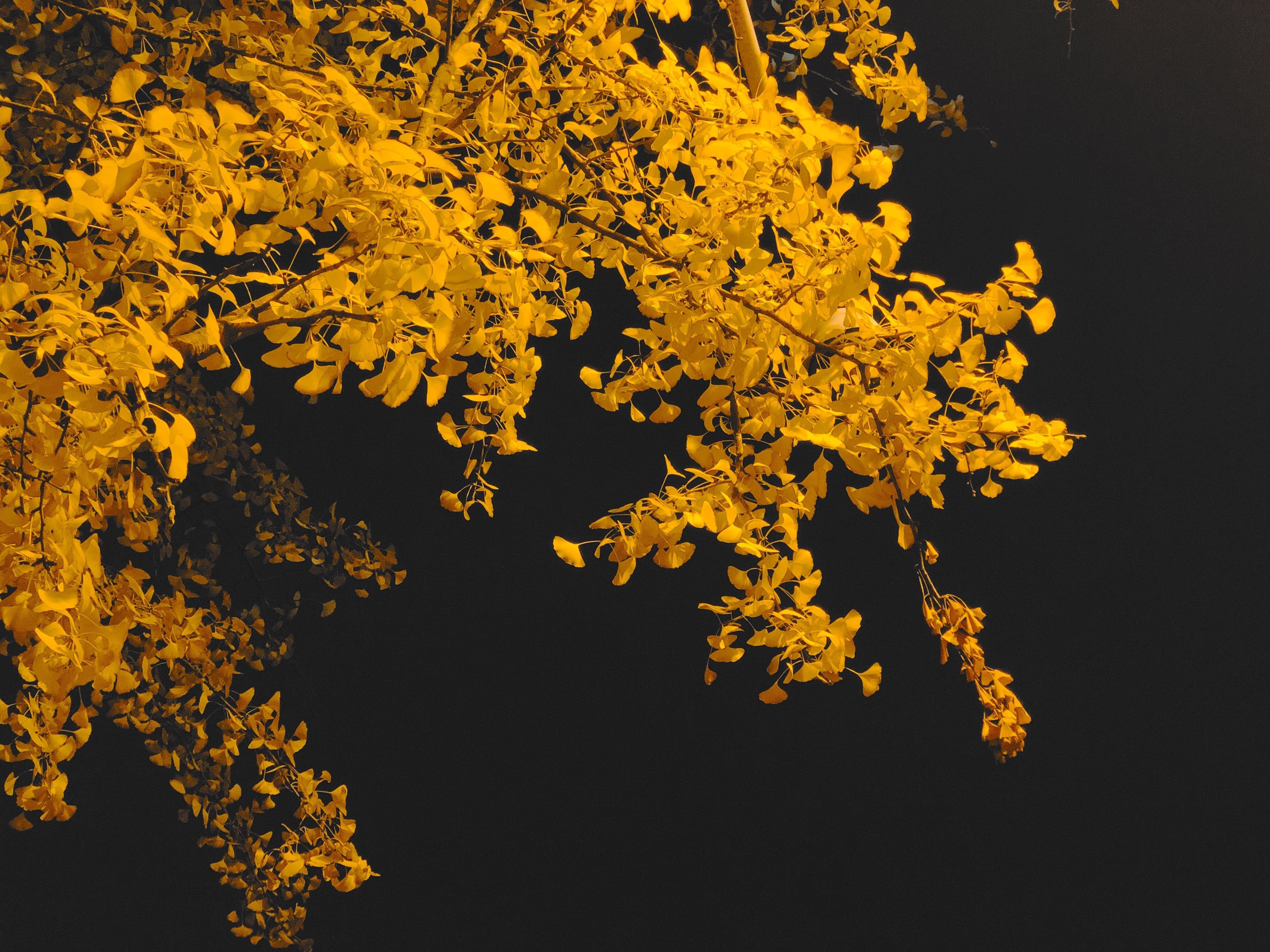 yellow and black floral textile