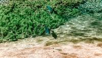 blue and black fish tank