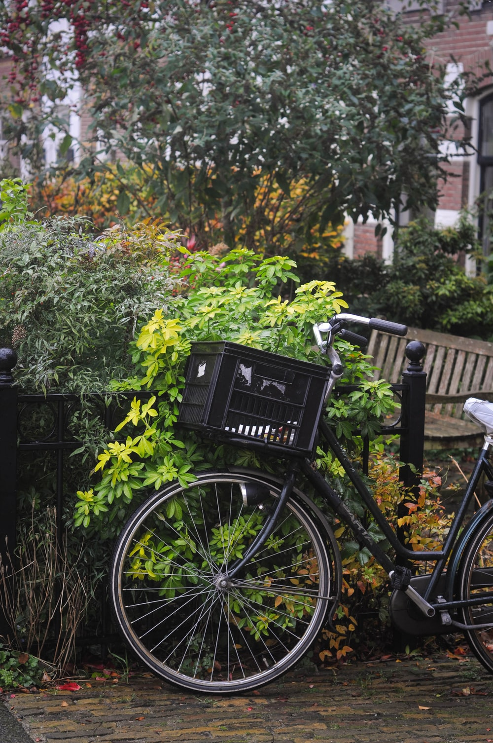 black step through bicycle leaning on green plant
