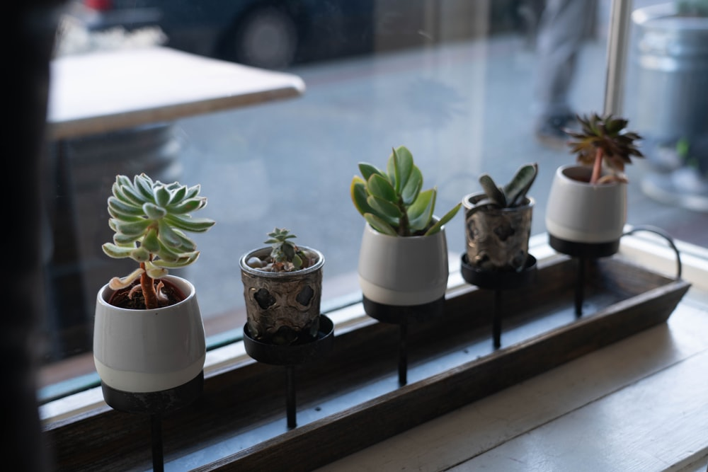 five green succulent plants