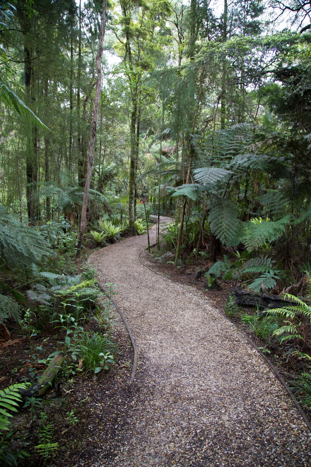 forest with pathway