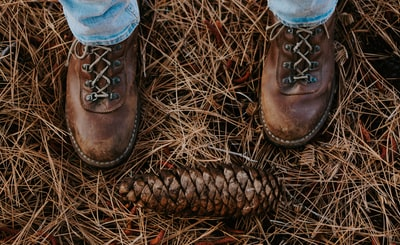 brown pinecone cowboys zoom background