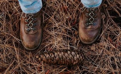 brown pinecone cowboys teams background