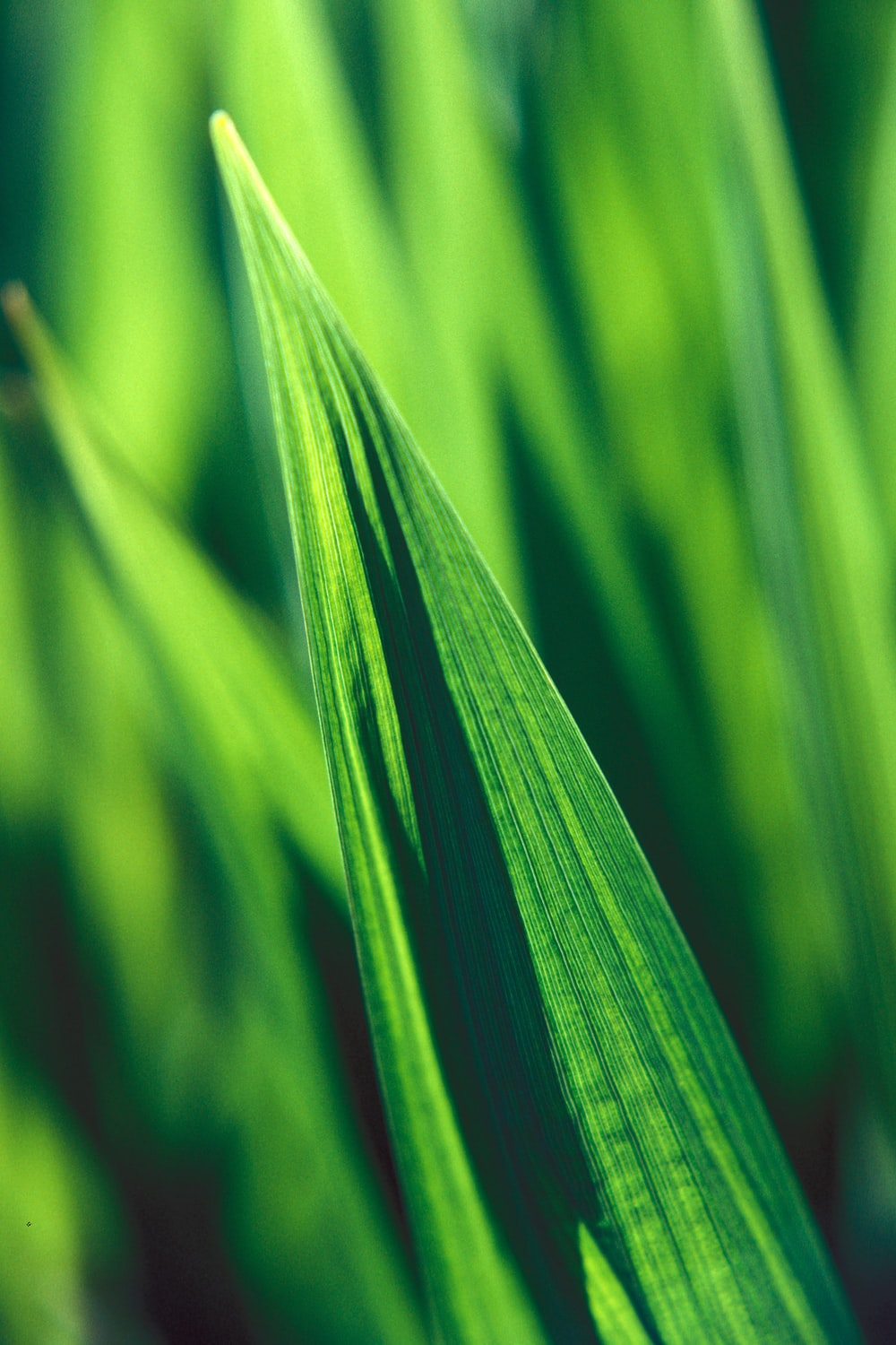 selective focus photography of linear leaf