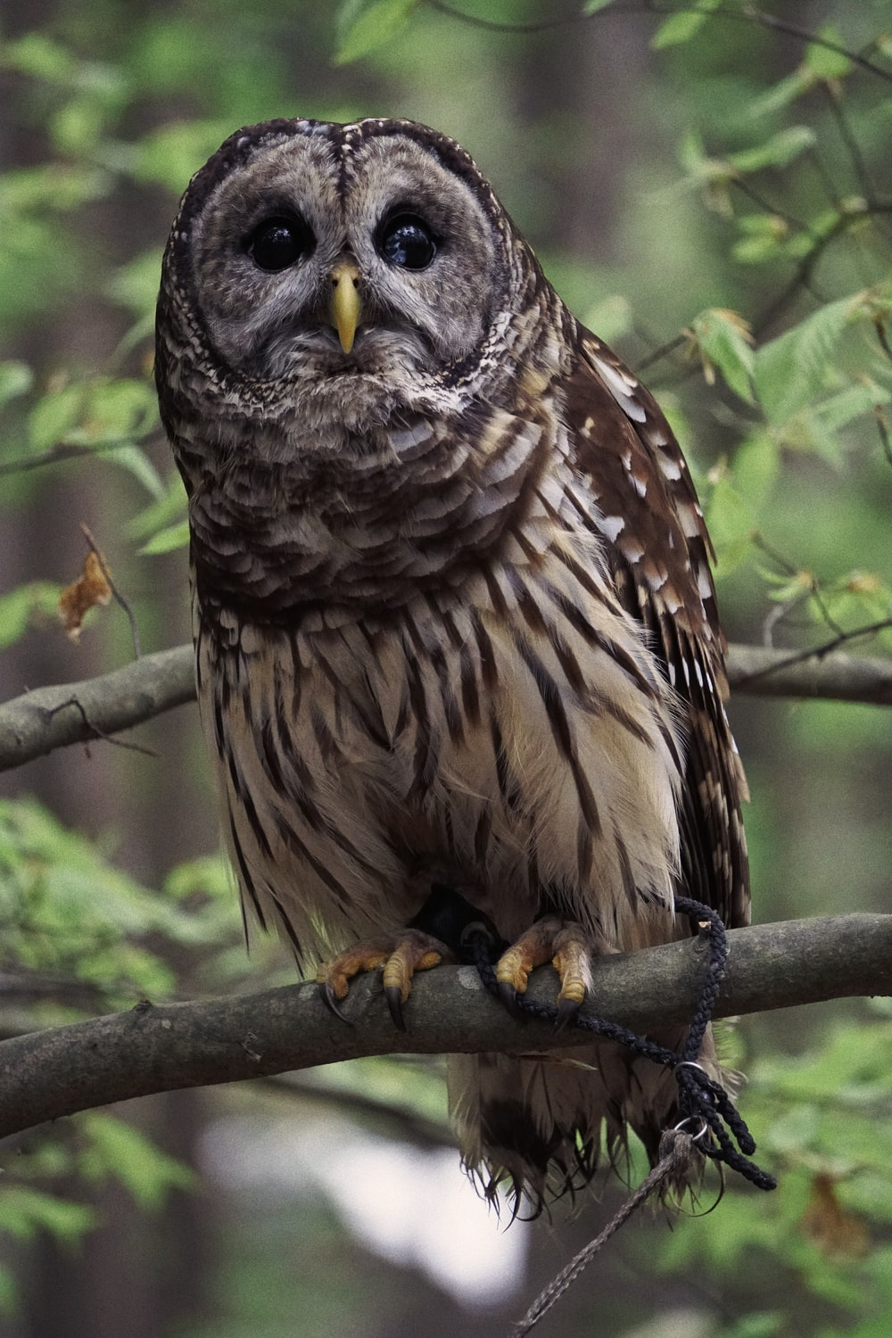brown owl perched on tree