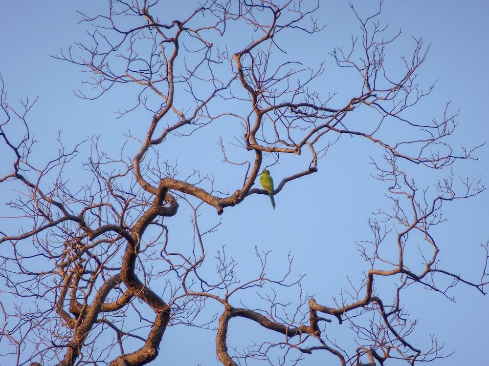 green bird perching on bare tree